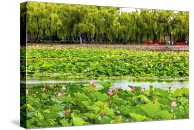 Pink Lotus Pads Garden Summer Palace, Beijing, China-William Perry-Stretched Canvas Print
