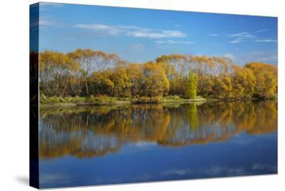 Autumn Colour and Clutha River at Kaitangata, Near Balclutha, New Zealand-David Wall-Stretched Canvas Print