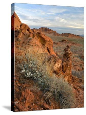 Landscape of Valley of Fire State Park, Nevada, Usa-Tim Fitzharris-Stretched Canvas Print