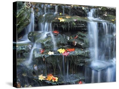Small Waterfall on Kitchen Creek, Ricketts Glen State Park, Pennsylvania, Usa-Tim Fitzharris-Stretched Canvas Print