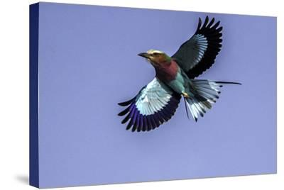 Soaring Above Tanzania-Art Wolfe-Stretched Canvas Print