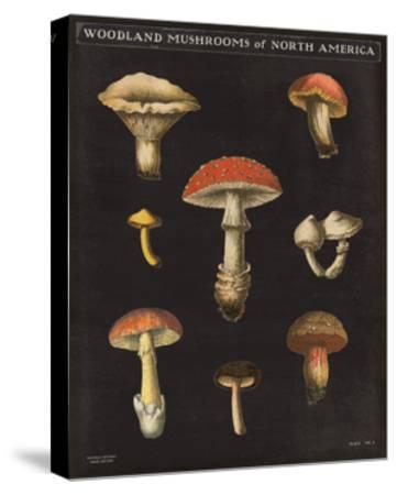 Mushroom Chart II-Wild Apple Portfolio-Stretched Canvas Print