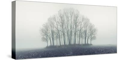 Small Forest in Autumn Foggy Morning-Konrad B?k-Stretched Canvas Print