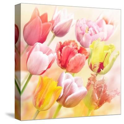 Tulips Flowers Close Up for-Svetlana Foote-Stretched Canvas Print