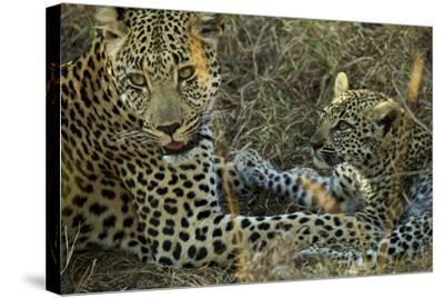 A Female Leopard Rests with Her Cub in Sabi Sand Game Reserve-Steve Winter-Stretched Canvas Print
