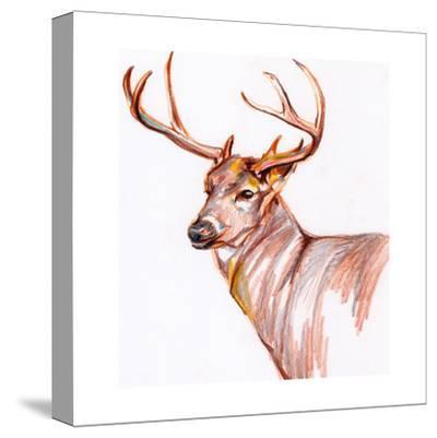 Deer in Pencil-Anne Seay-Stretched Canvas Print