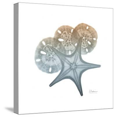 Earthy Hues Starfish and Sand Dollar-Albert Koetsier-Stretched Canvas Print