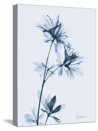 Azalea in Blue-Albert Koetsier-Stretched Canvas Print
