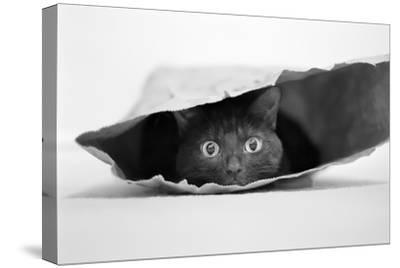 Cat in a Bag-Jeremy Holthuysen-Stretched Canvas Print