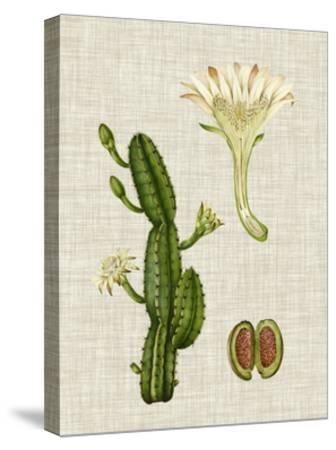 Elegant Tropicals III-Vision Studio-Stretched Canvas Print