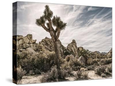 Views of Joshua Tree VIII-Rachel Perry-Stretched Canvas Print