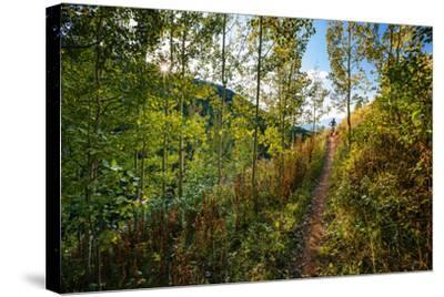 Mt Biker Rides The Singletrack On The Putt Putt Trail Across From Snow King Ski Area, Jackson, WY-Jay Goodrich-Stretched Canvas Print