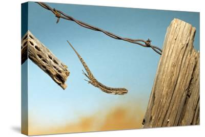 A Lizard Jumping Off A Fence-Karine Aigner-Stretched Canvas Print
