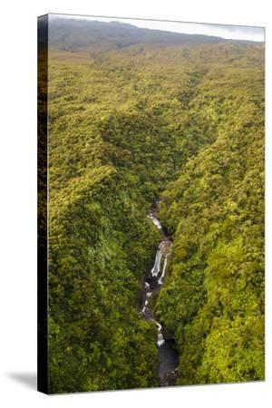 TNC Waikamoi Preserve, Maui, Hawaii, USA: Nature Conservancy's Waikamoi Preserve, From Helicopter-Axel Brunst-Stretched Canvas Print