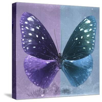 Miss Butterfly Euploea Sq - Purple & Blue-Philippe Hugonnard-Stretched Canvas Print