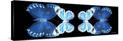 Miss Butterfly Duo Stichatura Pan - X-Ray Black Edition II-Philippe Hugonnard-Stretched Canvas Print