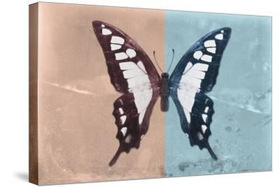 Miss Butterfly Cloanthus - Coral & Turquoise-Philippe Hugonnard-Stretched Canvas Print