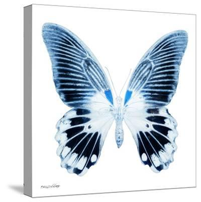 Miss Butterfly Agenor Sq - X-Ray White Edition-Philippe Hugonnard-Stretched Canvas Print