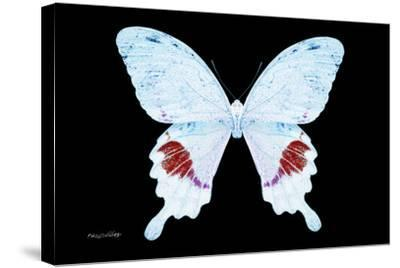 Miss Butterfly Hermosanus - X-Ray Black Edition-Philippe Hugonnard-Stretched Canvas Print