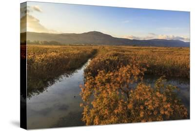 Hula Nature Reserve In Evening Light. Hula Valley. Israel-Oscar Dominguez-Stretched Canvas Print