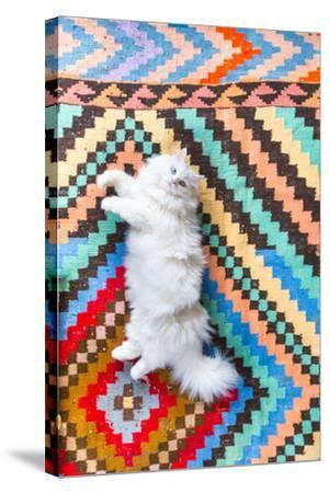 Ares, A Long Haired, White, Doll Face Persian Cat With Bi-Colored Eyes On A Colorful Rug-Ben Herndon-Stretched Canvas Print