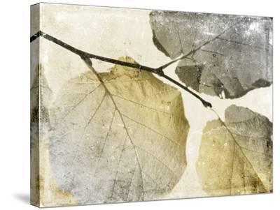 Classic Leaves-Jace Grey-Stretched Canvas Print