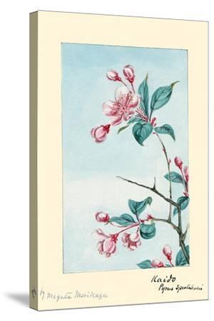 Kaido Pyrus Spectabalis-Megata Morikaga-Stretched Canvas Print