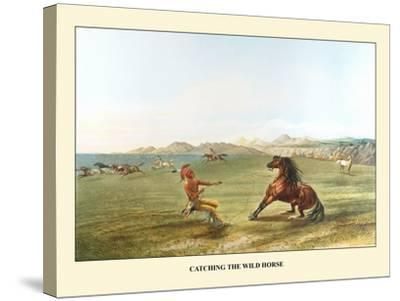 Catching The Wild Horse-George Catlin-Stretched Canvas Print