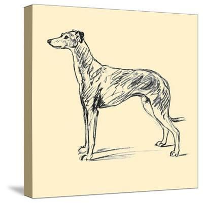 Radicome The Greyhound-Lucy Dawson-Stretched Canvas Print