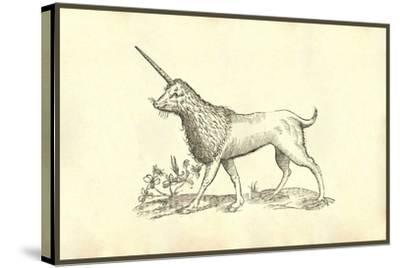 Unicorn (Camphurch Effigies)-Ulisse Aldrovandi-Stretched Canvas Print