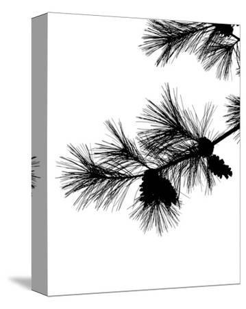 Pine Soliloquy I-Monika Burkhart-Stretched Canvas Print