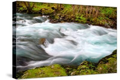 Rainforest River II-Douglas Taylor-Stretched Canvas Print