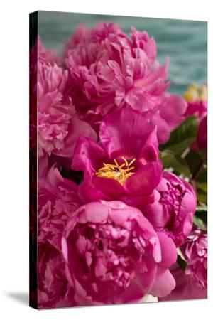 Fuchsia Peonies II-Karyn Millet-Stretched Canvas Print