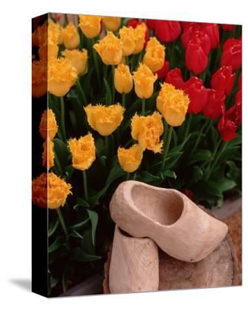 Wooden Shoe Tulips-Ike Leahy-Stretched Canvas Print
