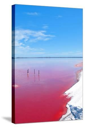 Pink Lake, Western Australia. this Lake Turns Pink in Summer Cause of an Algae with Red Pigments. T-Konrad Mostert-Stretched Canvas Print