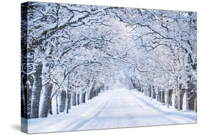 Alley in Snowy Morning-Anna Grigorjeva-Stretched Canvas Print