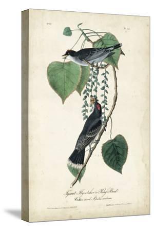 Flycatcher & King Bird-John James Audubon-Stretched Canvas Print