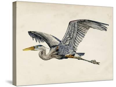 Blue Heron Rendering III-Melissa Wang-Stretched Canvas Print