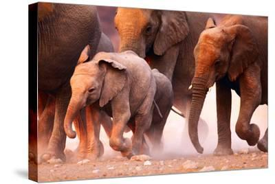 Elephant Herd on the Run in Etosha Desert-Johan Swanepoel-Stretched Canvas Print