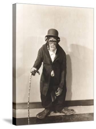 Monkey Dressed in Tight Overcoat and Bowler Hat-Everett Collection-Stretched Canvas Print