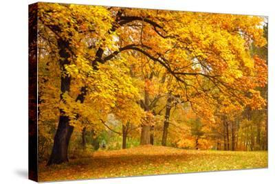 Collection of Beautiful Colorful Autumn Leaves / Green, Yellow, Orange, Red-Taiga-Stretched Canvas Print