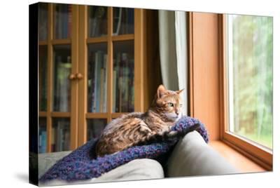 Bengal Mix Cat Relaxing on Indigo Blue Blanket by Large Window Looking Outside-Anna Hoychuk-Stretched Canvas Print