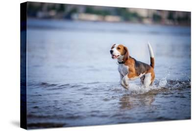 The Dog in the Water, Swim, Splash- dezi-Stretched Canvas Print