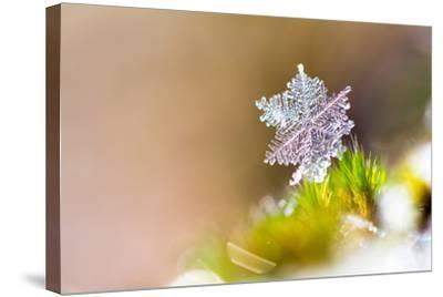 Beautiful close up Image of a Snowflake on the Ground in Nature-Dennis van de Water-Stretched Canvas Print