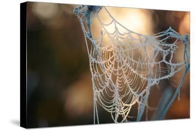 Frozen October Morning Cobwebs.- Stone36-Stretched Canvas Print