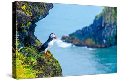 Puffin - Iceland-Simon Dannhauer-Stretched Canvas Print
