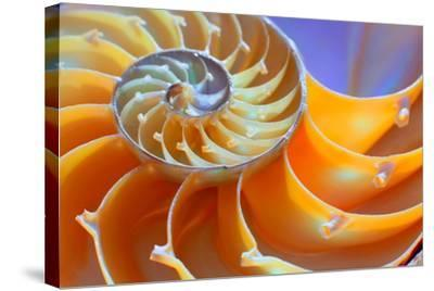 Close-Up of a Nautilus Shell Section- aabeele-Stretched Canvas Print