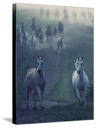 Wild Horses-conrado-Stretched Canvas Print