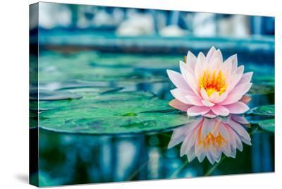 Beautiful Pink Lotus, Water Plant with Reflection in a Pond-Vasin Lee-Stretched Canvas Print