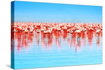 Flamingo Birds in the Lake Nakuru, African Safari, Kenya-Anna Om-Stretched Canvas Print